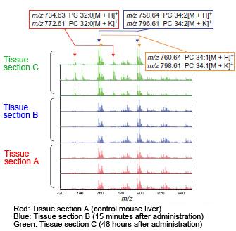 maldi-tof对冰冻组织切片直接分析结果